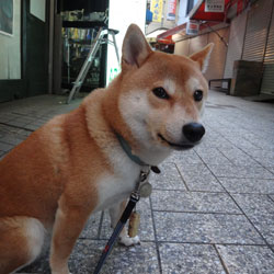 20130705-niho-1.jpg