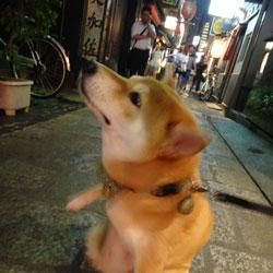 20130813-hozenji-1.jpg