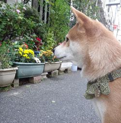 20131004-fuji.jpg