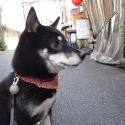 20131004-fuji2.jpg