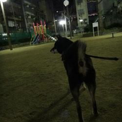 20131205-park.jpg