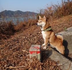 20140103-yama2.jpg