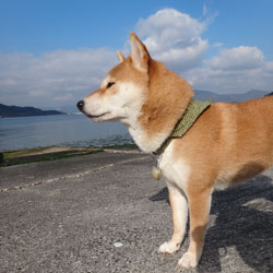 20140106-nagasaki.jpg