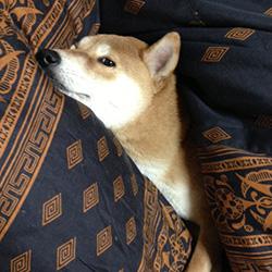 20140304-futon.jpg
