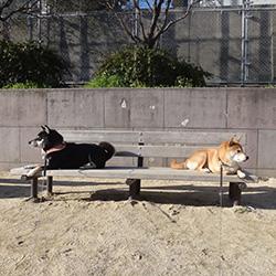 20140322-kozu2.jpg