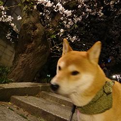 20140401-hana2.jpg