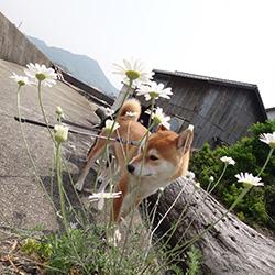 20140503-hana1.jpg