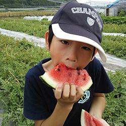 20140706-suika2.jpg