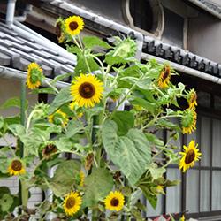20140817-ji1.jpg