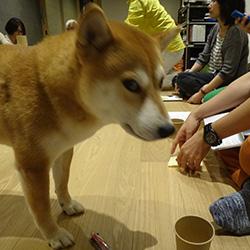 20140818-machi3.jpg