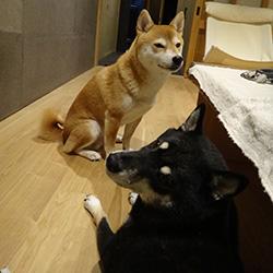 20141013-taifu2.jpg