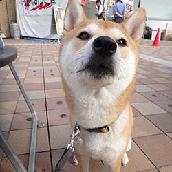 20141025-yatai1.jpg