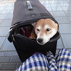 20141123-shinkansen.jpg