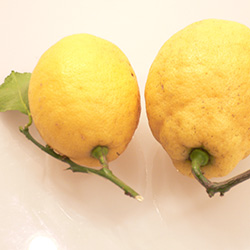 20150112-lemon.jpg
