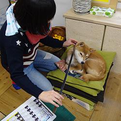 20150116-kana.jpg