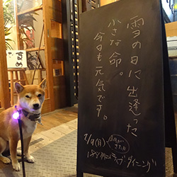 20150209-nikunohi.jpg