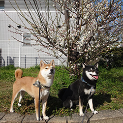 20150221-kozu3.jpg