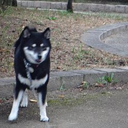 20151011-kozu2.jpg