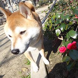 20160131-kozu2.jpg