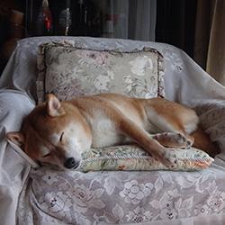 20160429-sofa2.jpg