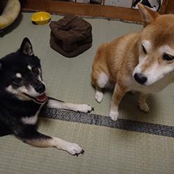 20160815-tatami2.jpg