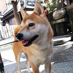 20160907-hozenji1.jpg