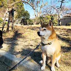 20190114-kozu.jpg