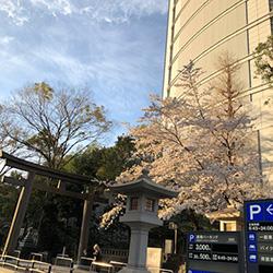 20190404-sakura.jpg