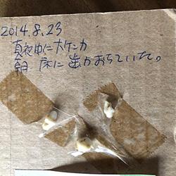 20200209-nikunohi.jpg