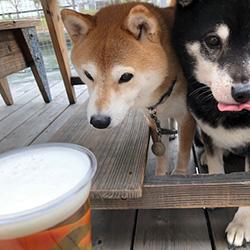 20200329-beer1.jpg